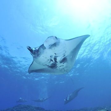 World's First Contactless Underwater Ultrasound Scanner Aids Conservation Efforts