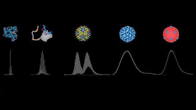 Native Mass Spectrometry: A Glimpse Into the Machinations of Biology