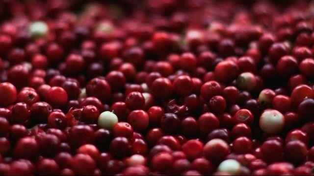 Cranberry Extract Makes Bacteria More Sensitive to Antibiotics