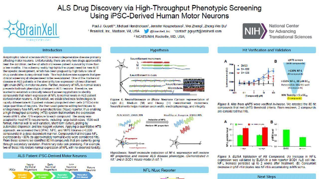ALS Drug Discovery via High-Throughput Phenotypic Screening Using iPSC-Derived Human Motor Neurons