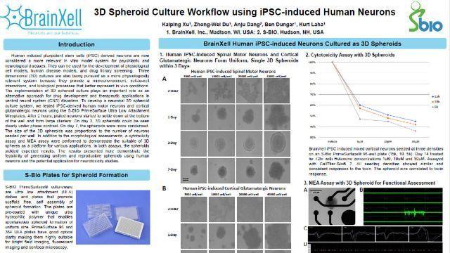 3D使用IPSC诱导的人神经元的球形文化工作流程