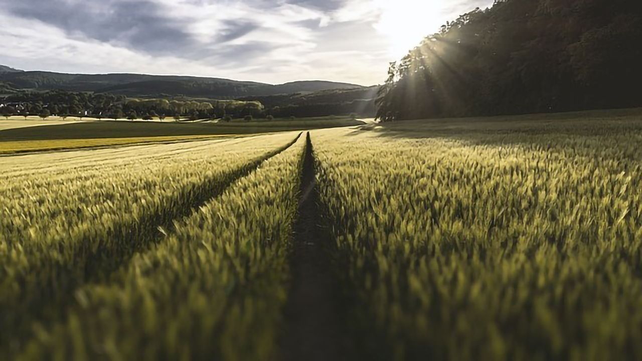 Global Food Production Already Suffering From Climate Change