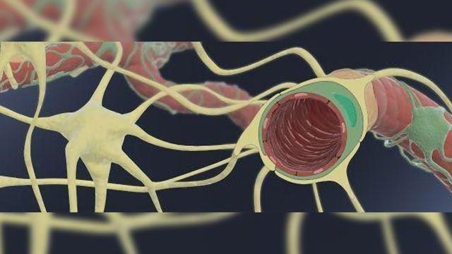 Human Blood-Brain Barrier Chip Aids Development of Brain-targeting Drugs