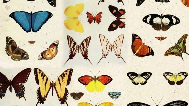 The Art of Gene-editing Butterflies (Painting With CRISPR)