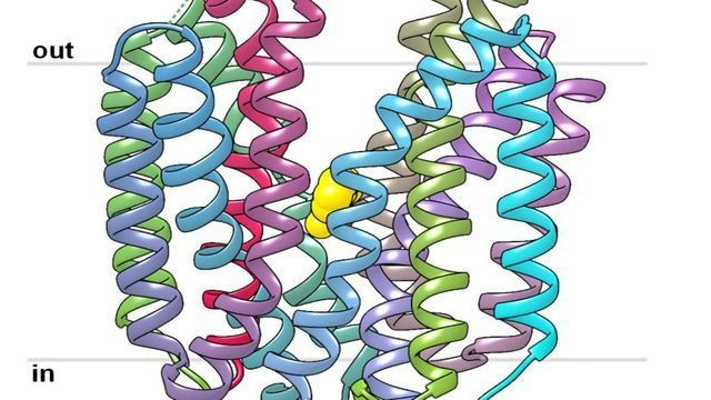Cancer Control: Researchers Solve the Structure of Important Transport Protein