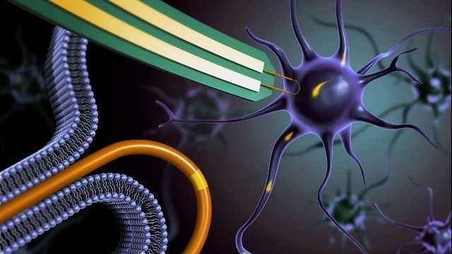 Nanowire Army Lets Researchers Record Signals From Inside Neurons