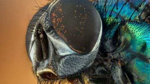 Put Down That Flyswatter: Insects Feel Pain Too
