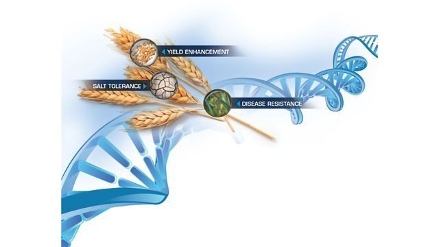 Arbor Biosciences Partners with Curio Genomics for Analysis of IWGSC Wheat Exome