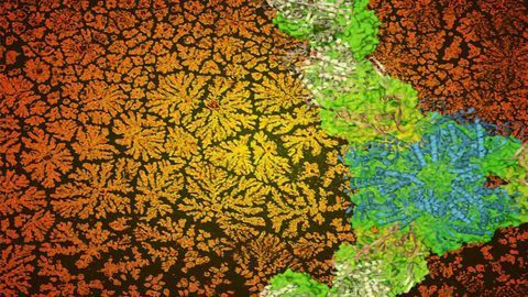 Never-ending Geometric Patterns Made From…Proteins?
