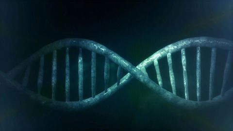 """Looking at """"Junk"""" DNA for Insights Into ASD and Stroke"""