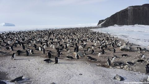 First Assessment of Blood Abnormalities in Antarctic Penguin Colony