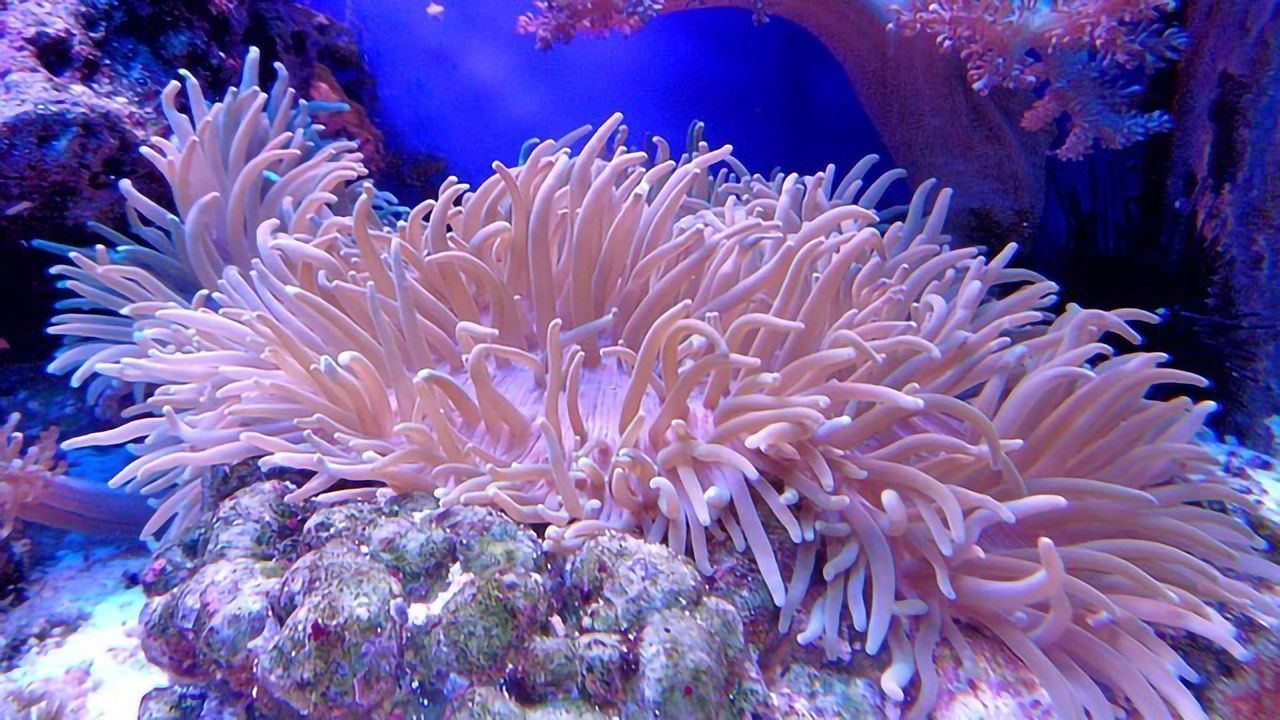 Guidelines Throw Coral a Lifeline