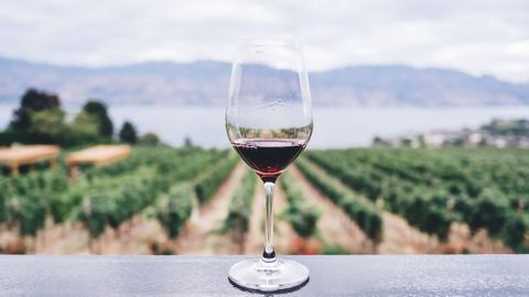 Red Wine Molecule Resveratrol Could Slash Stress (in Mice at Least)