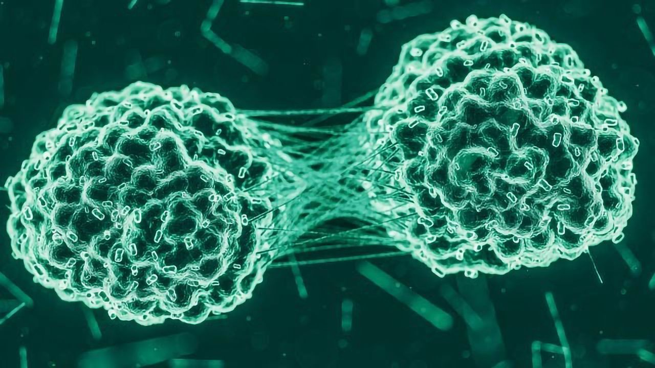 """Incredible """"HULLK"""" Controls Growth of Prostate Cancer"""