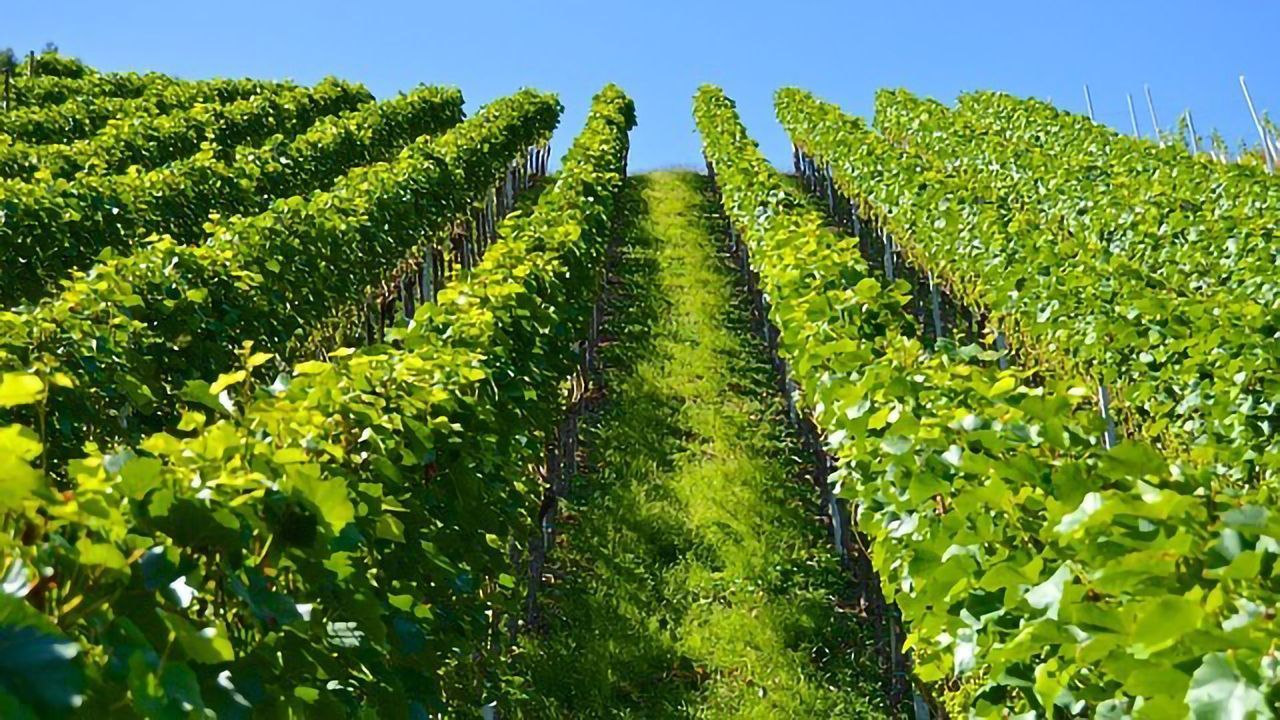 Win in the Fight Against Downy Mildew