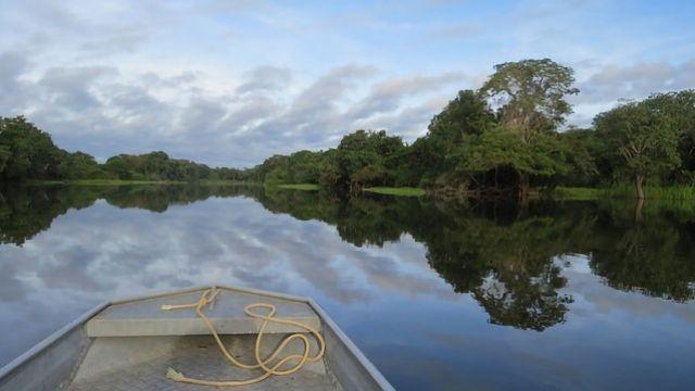 Amazon Rainforest Fertilized by African Smoke