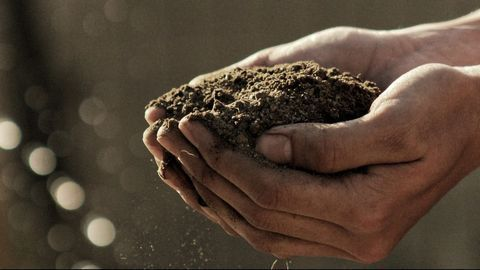 Anti-inflammatory Fat Found in Soil Bacterium