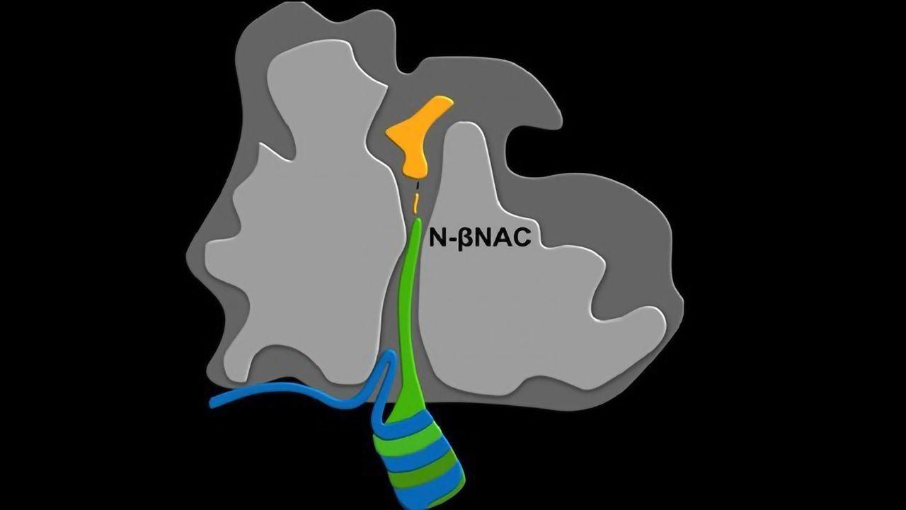 Novel Protein-sensing Mechanism Discovered