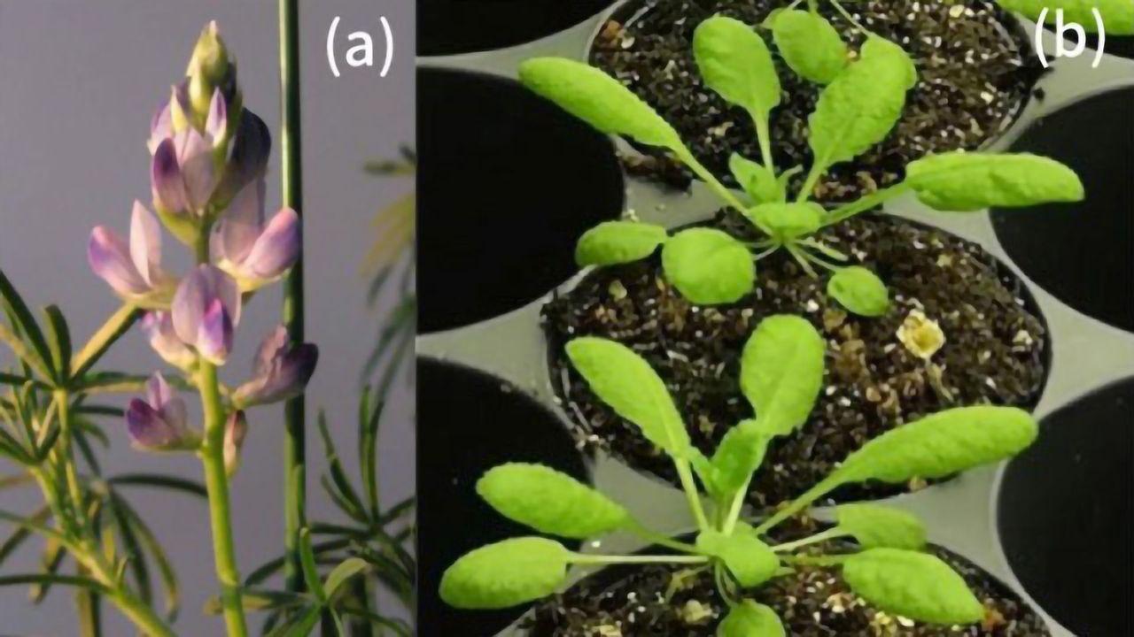 Recreating Metabolic Evolution in Plants