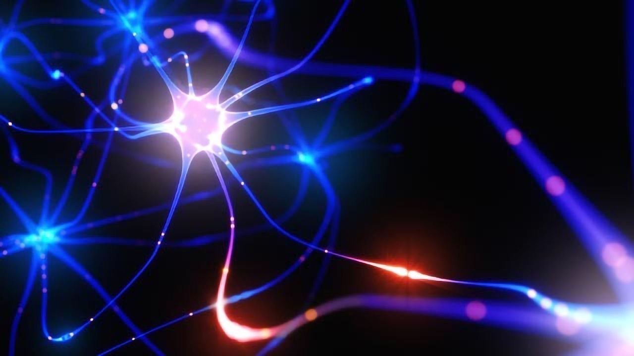 Drug Slows Progression of Scrapie in Mouse Model