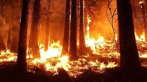 Why Are We Dumping Fertilizer on Forest Fires?