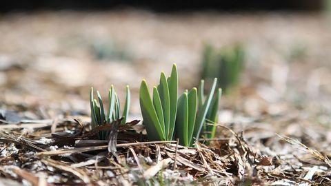 Novel Epigenetic Regulation Mechanism Underlies Improved Stress Response in Plants