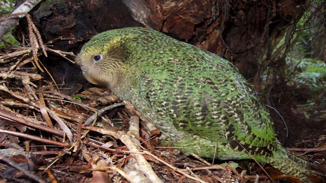 Biodiversity of New Zealand Will Take Millions of Years to Recover