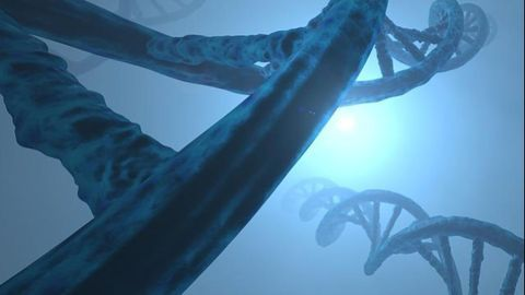 The Role of Repetitive DNA and Protein Sequences in Tumor Evolution