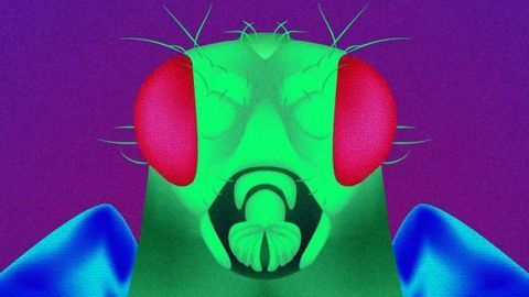 Unlocking the Secret of Mutant Flies' Longevity