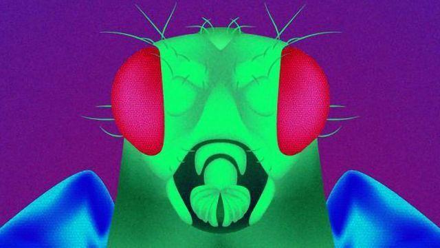 Unlocking the Secret of Mutant Flies' Longevity | Technology