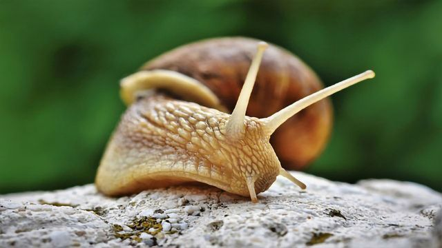 Unraveling the Mystery of the Invasive Snail