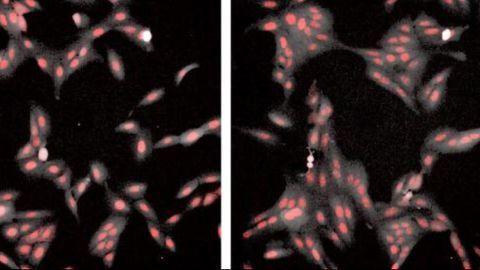 Human Cells Found to Form Fractal-like Clusters