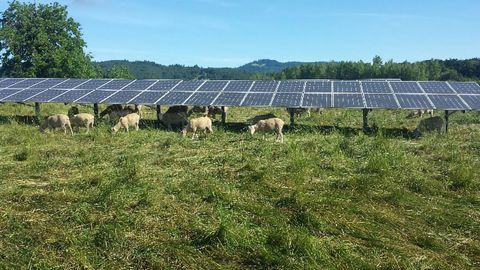Farming Energy Alongside Food Could Be the Answer