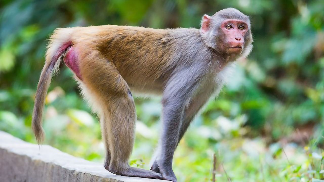 Single Molecule Boost Reduces Anxiety in Macaque Models