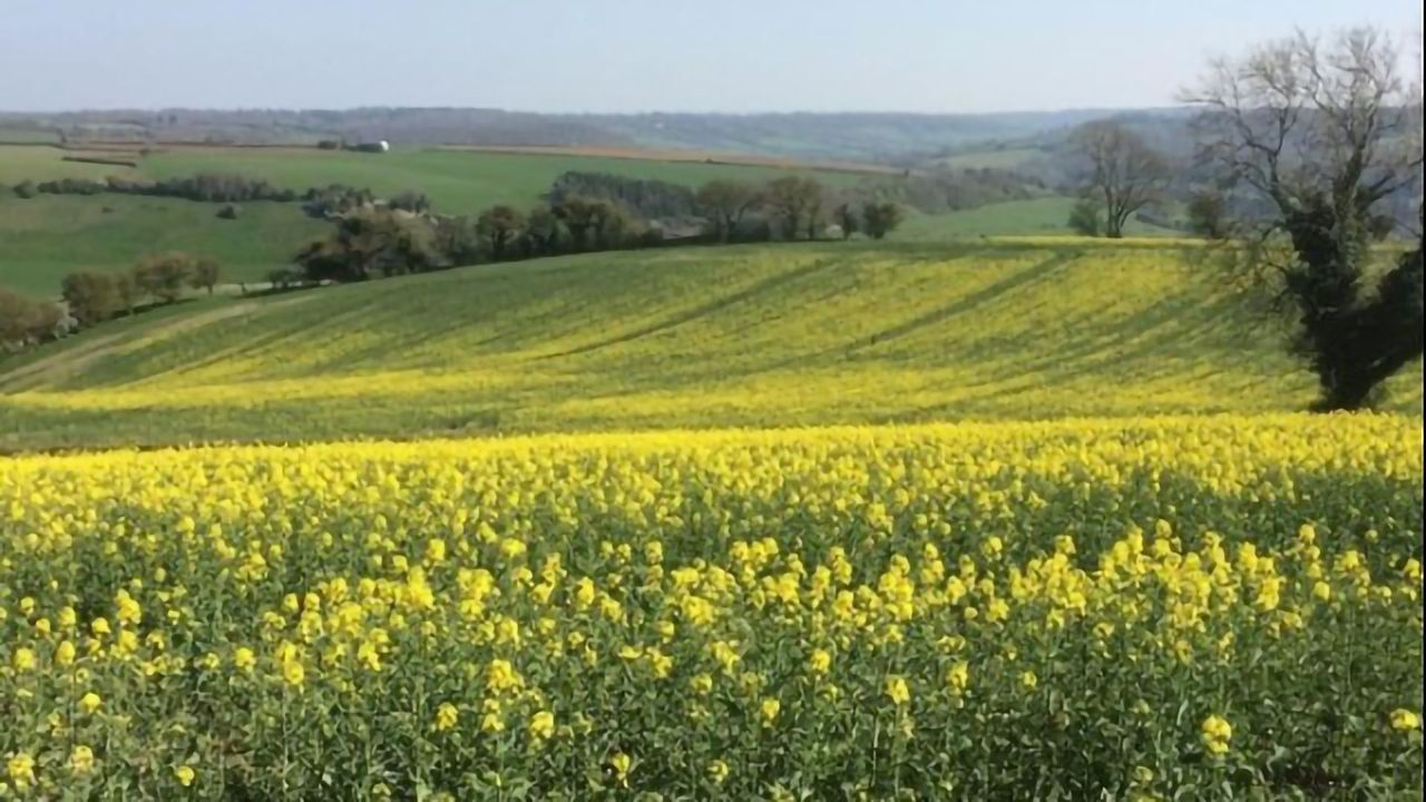 Could Plant Biological Clocks Set the Time for Crop Spraying?