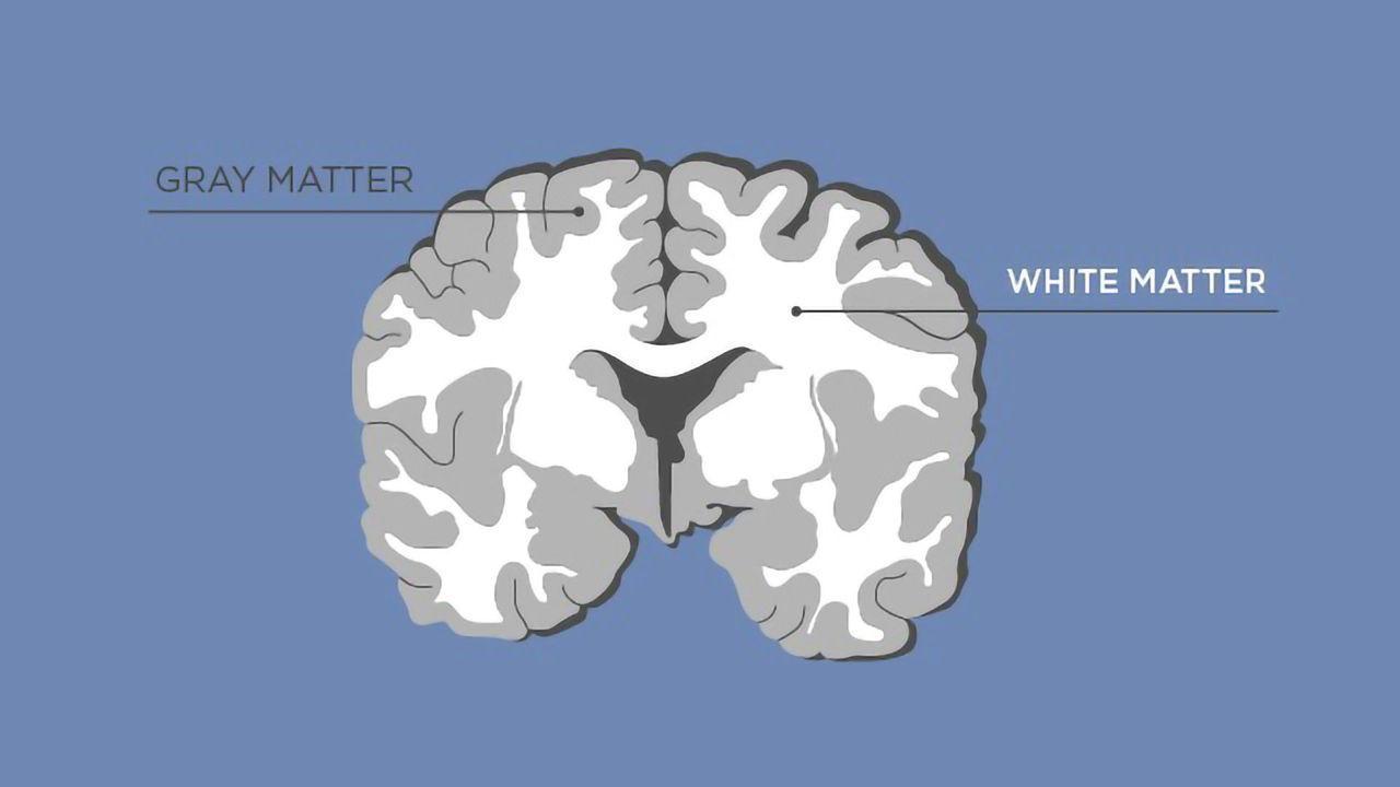 Gray Matter vs White Matter