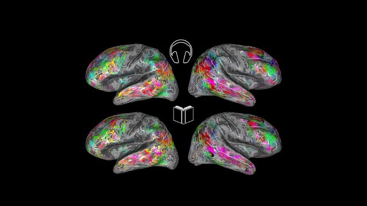 This Map of the Brain Can Tell What You're Reading