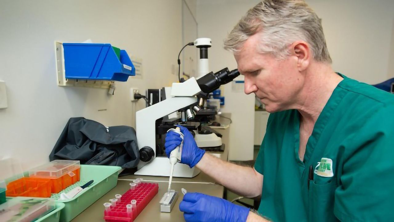 New Rapid DNA Test to Diagnose Chlamydia Infection in Koalas