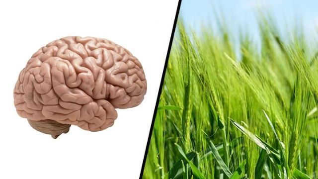 Cell Suicide Could Hold Key for Brain Health and Food Security