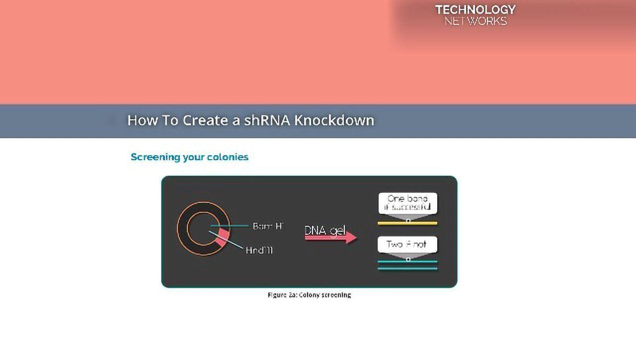 How To Create a shRNA Knockdown