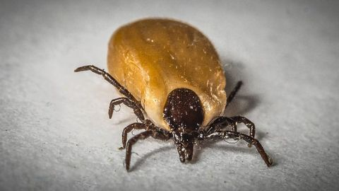 An Innovative Diagnostic for Lyme Disease