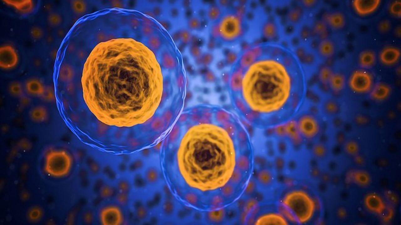 Unlocking the Secrets of the Hox Genes