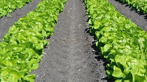 What Is Science Telling Us About Soil Testing and Treatment?