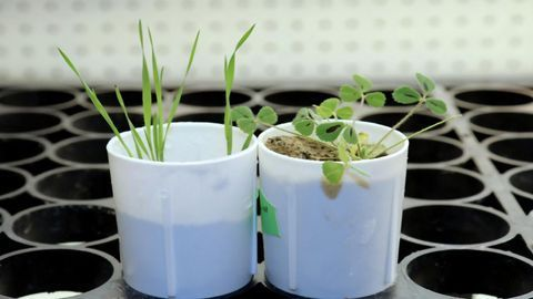 Plant Gene Discovery May Help Reduce Fertilizer Pollution in Waterways