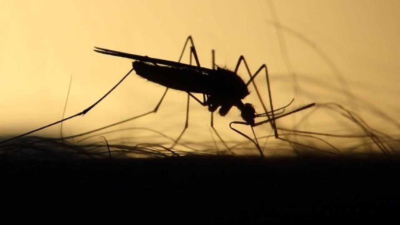 New Collaboration Aims to Increase Yield of Anti-Zika Antibody