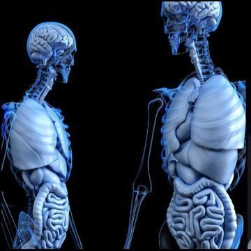 Parkinson's Disease May Start in the Intestines, New Rat Study Conclude
