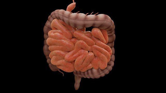 Serotonin and Anti-depressant Drug Alter the Gut's Microbiota