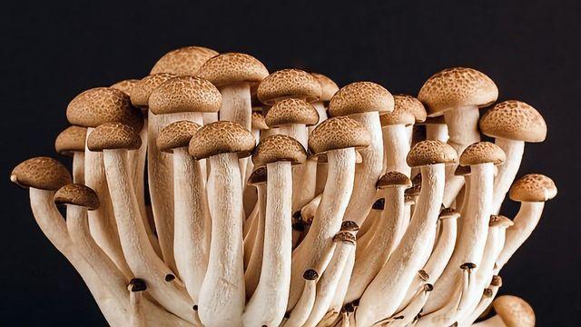 Fungal Genetics Yield Insights on Sexual Development