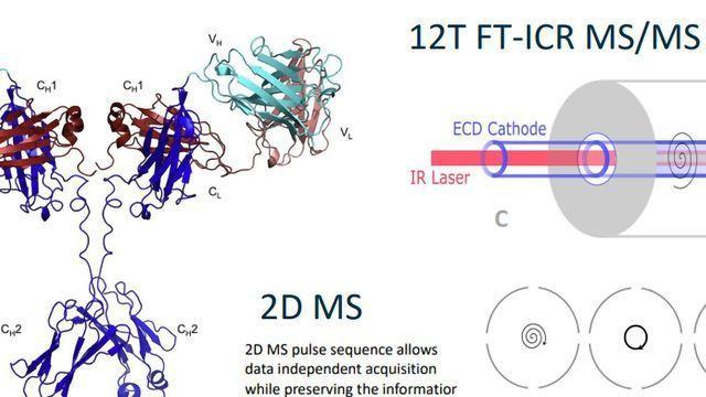 2D FT-ICR MS/MS Analysis of lgG1