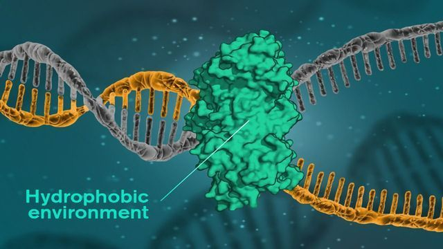 Disproving the Prevailing Theory of How DNA Binds Itself